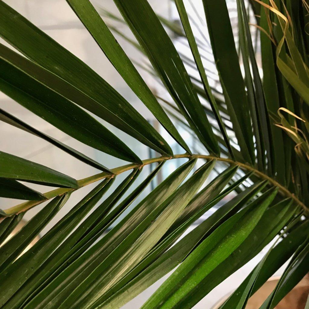 Palmier semi naturel pour la RATP par L'ère Végétale
