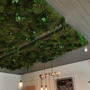 plafond-vegetal-stabilise-lere-vegetale