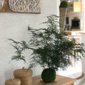 kokedama-stabilise-lere-vegetale