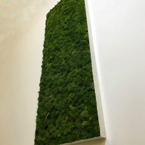 tableau-vegetal-lere-vegetale