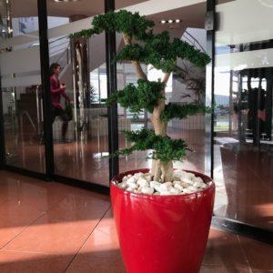 bonsaï-stabilisé