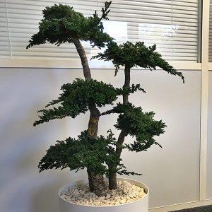 Plante stabilisée L'ère Végétale