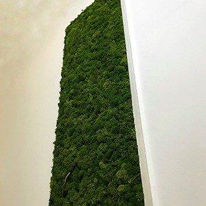 lichen long