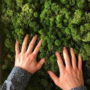 L'ère Végétale créations végétales stabilisées - créateur d'ambiance intérieure