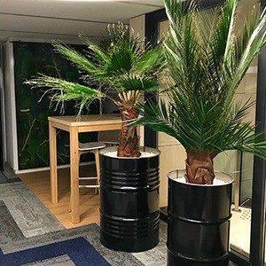 palmiers ratp